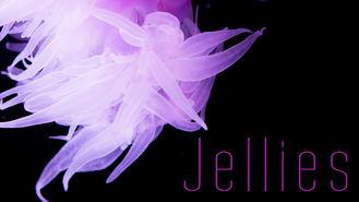 Netflix box art for Jellies