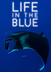 Life in the Blue
