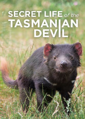 Secret Life of the Tasmanian Devil Netflix IN (India)